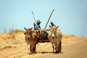 Oxcart pulled by 2 ox, traveling with kids